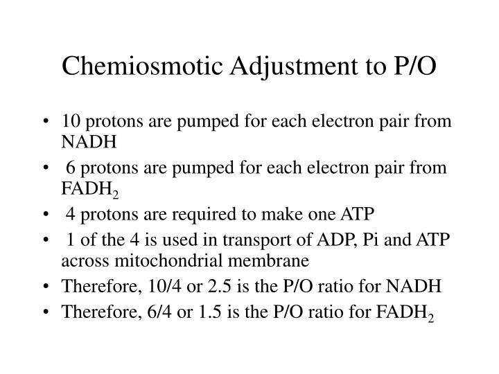 Chemiosmotic Adjustment to P/O