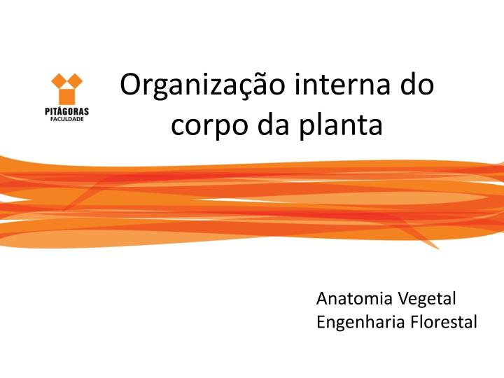 organiza o interna do corpo da planta