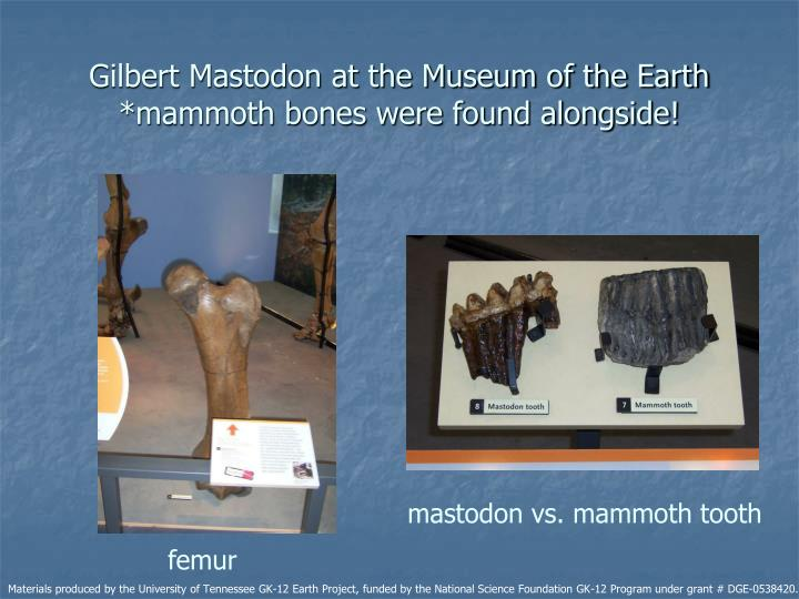 Gilbert Mastodon at the Museum of the Earth