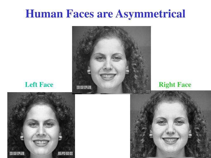 Human faces are asymmetrical