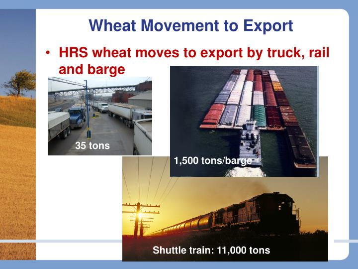 Wheat movement to export