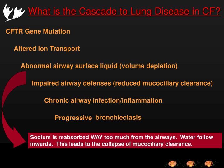 What is the Cascade to Lung Disease in CF?