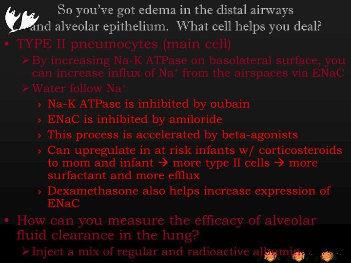 So you've got edema in the distal airways