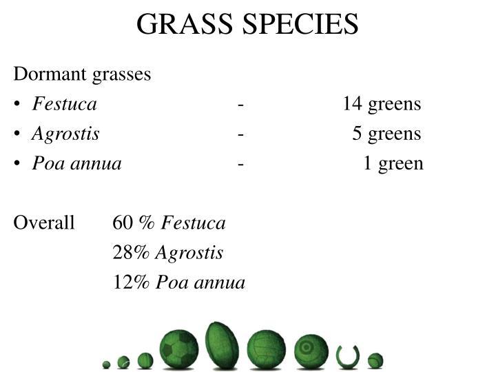 GRASS SPECIES