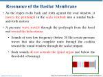 resonance of the basilar membrane