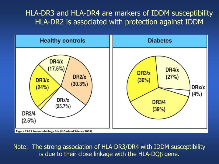 HLA-DR3 and HLA-DR4 are markers of IDDM susceptibility