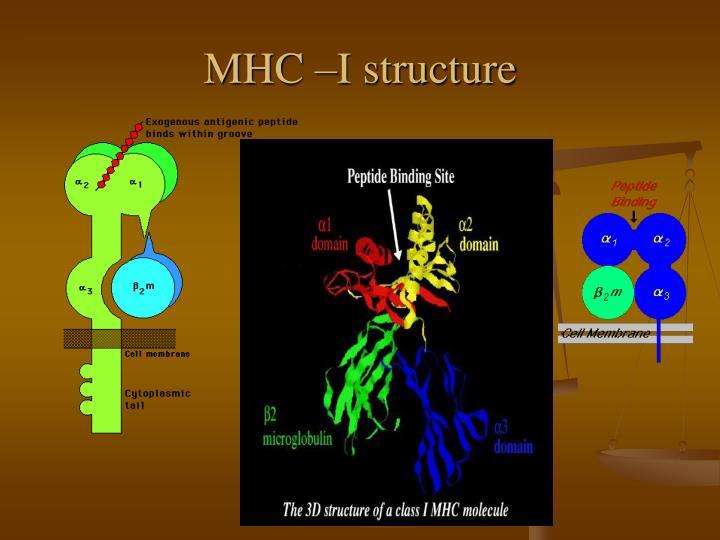 MHC –I structure