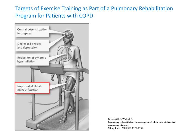 Targets of Exercise Training as Part of a