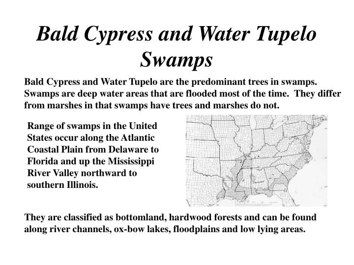 Bald cypress and water tupelo swamps