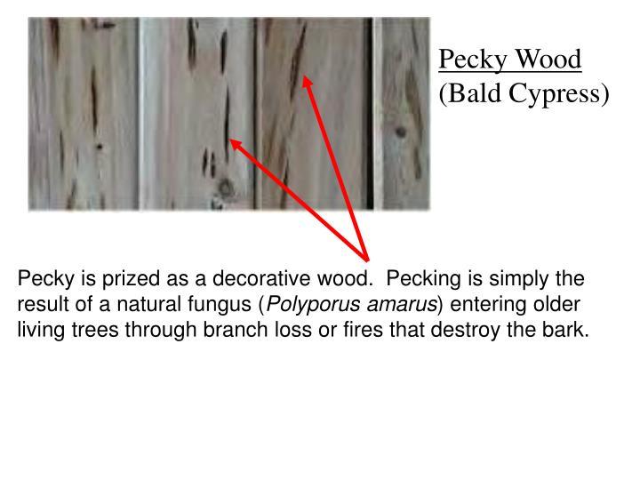 Pecky Wood
