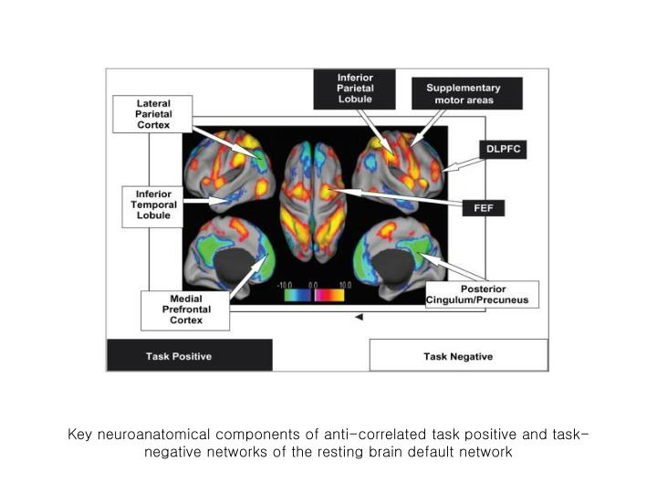 Key neuroanatomical components of anti-correlated task positive and task-negative networks of the resting brain default network
