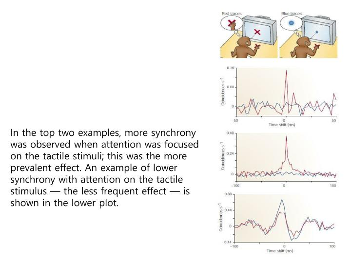 In the top two examples, more synchrony was observed when attention was focused on the tactile stimuli; this was the more prevalent effect. An example of lower synchrony with attention on the tactile stimulus — the less frequent effect — is shown in the lower plot.