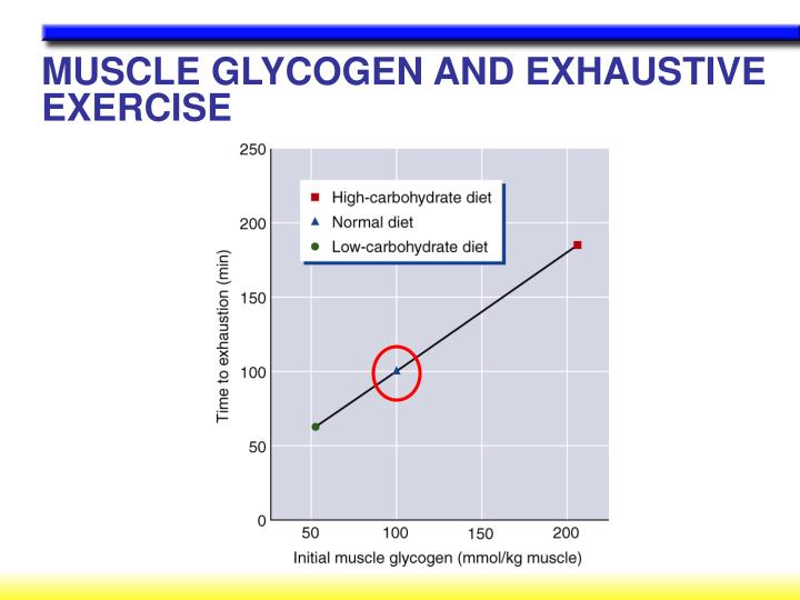 MUSCLE GLYCOGEN AND EXHAUSTIVE EXERCISE