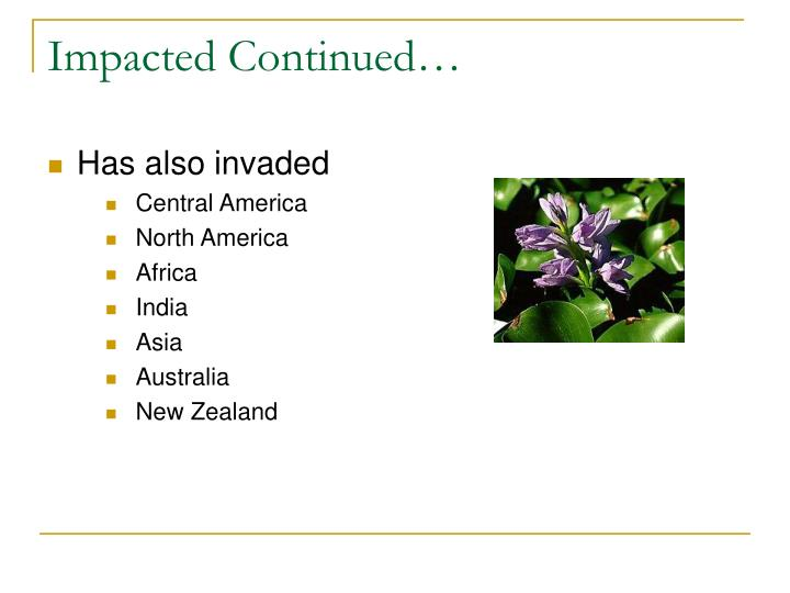 Impacted Continued…