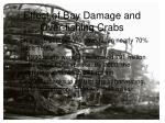 effect of bay damage and over fishing crabs