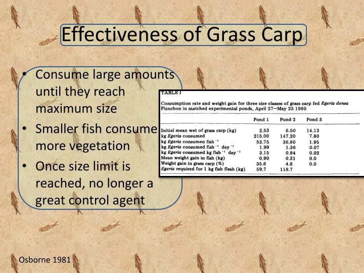 Effectiveness of Grass Carp
