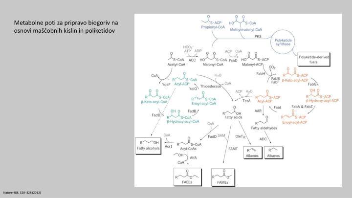 Metabolne