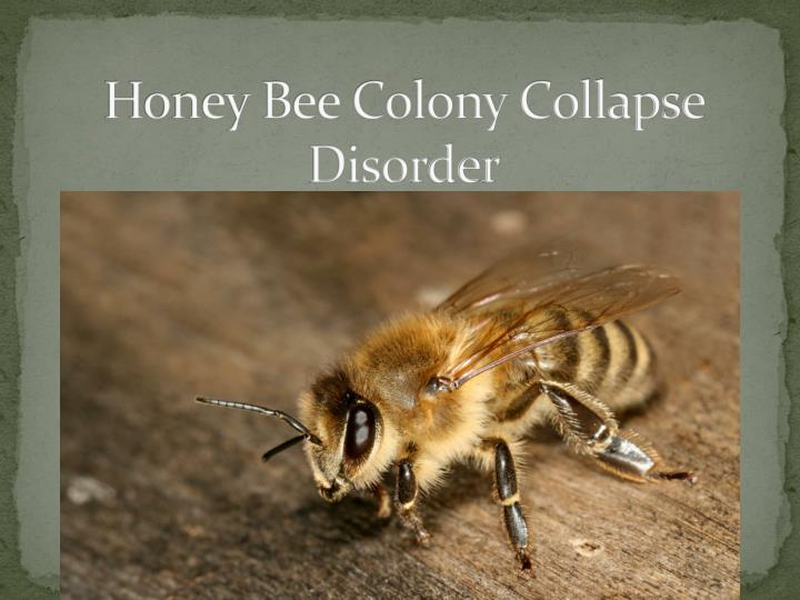 honey bee colony collapse disorder n.