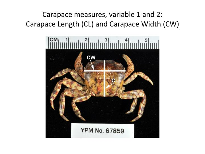 Carapace measures, variable 1 and 2: