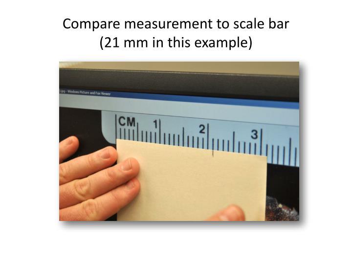 Compare measurement to scale bar