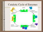 catalytic cycle of enzymes
