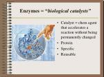 enzymes biological catalysts