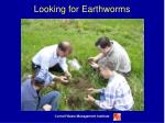 looking for earthworms
