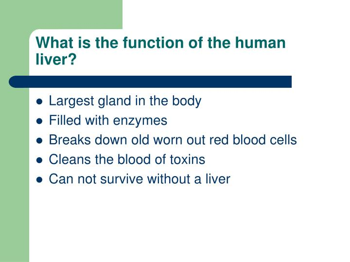 Ppt What Is The Function Of The Human Liver Powerpoint