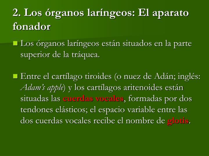 2. Los órganos laríngeos: El aparato fonador