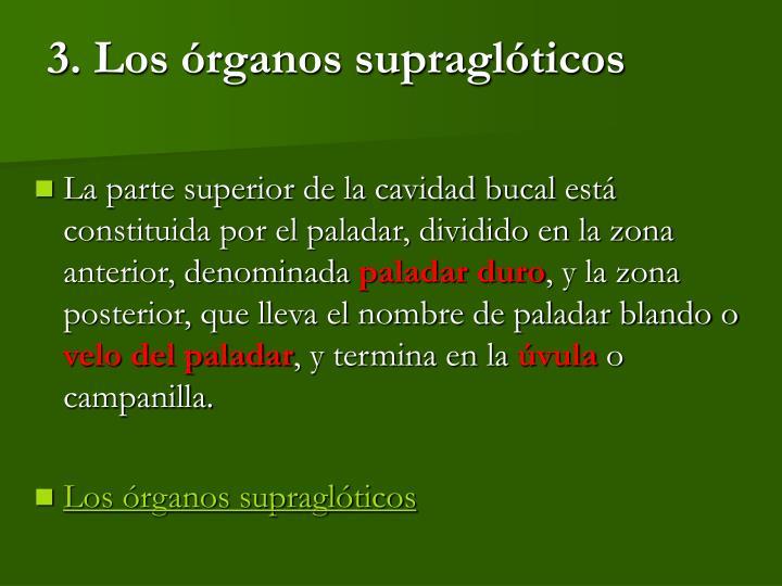 3. Los órganos supraglóticos
