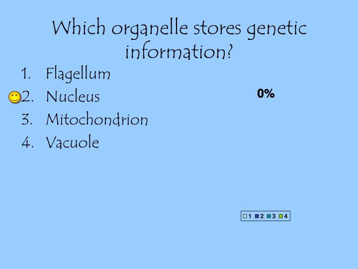 Which organelle stores genetic information?