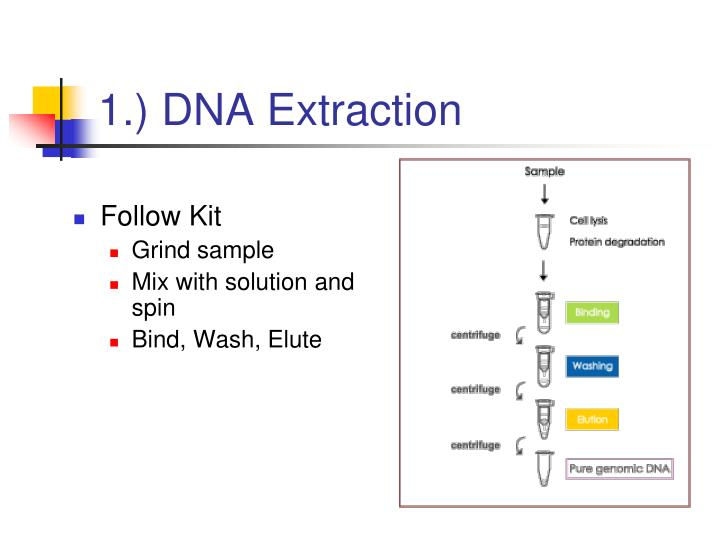 1 dna extraction n.