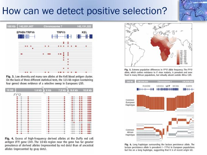 How can we detect positive selection?