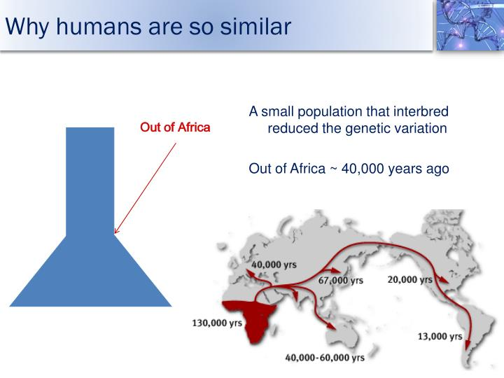 Why humans are so similar