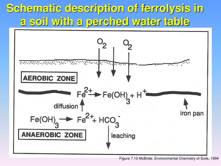 Schematic description of ferrolysis in a soil with a perched water table