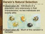 darwin s natural selection4