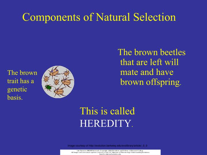 Components of Natural Selection