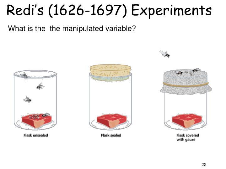 Redi's (1626-1697) Experiments