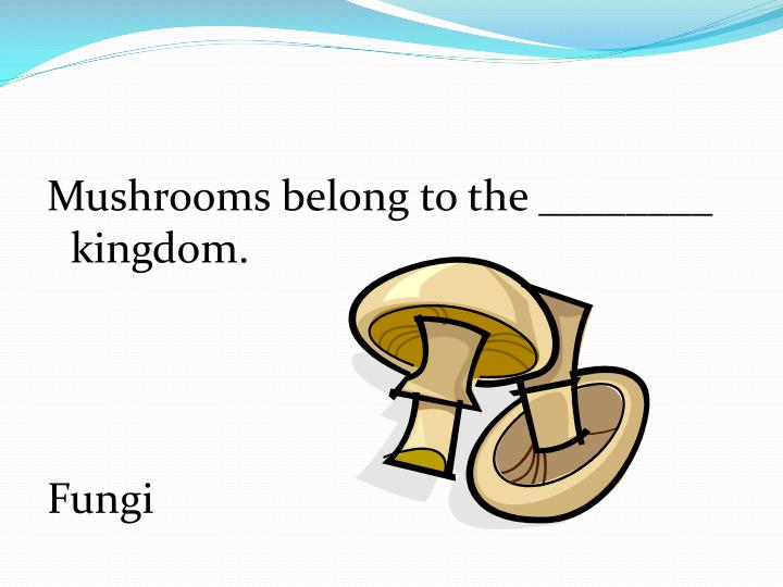 Mushrooms belong to the ________ kingdom.