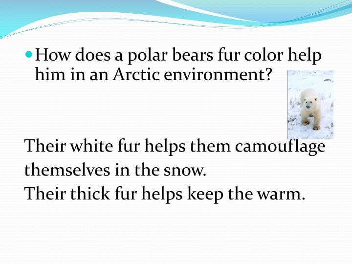 How does a polar bears fur color help him in an Arctic environment?