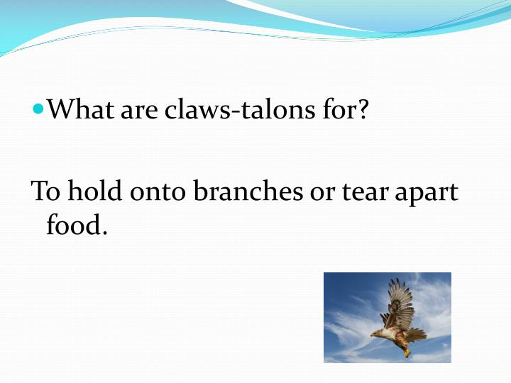 What are claws-talons for?