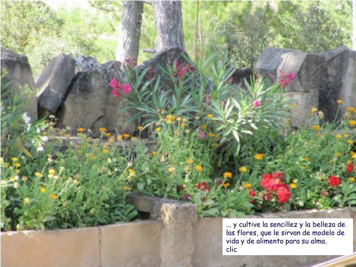 ... y cultive la sencillez y la belleza de las flores, que le sirvan de modelo de vida y de alimento para su alma.