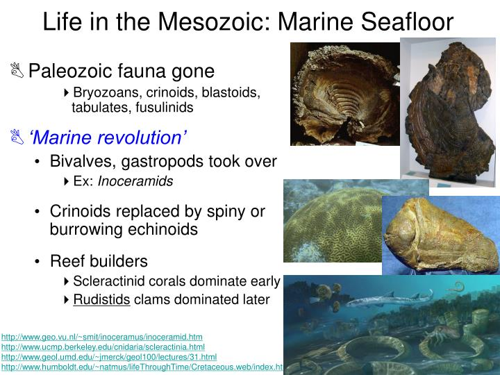 Life in the Mesozoic: Marine Seafloor