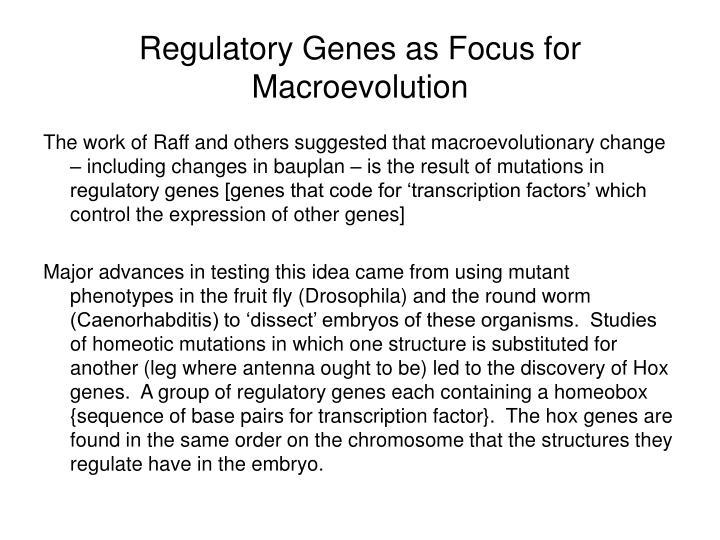 Regulatory Genes as Focus for Macroevolution