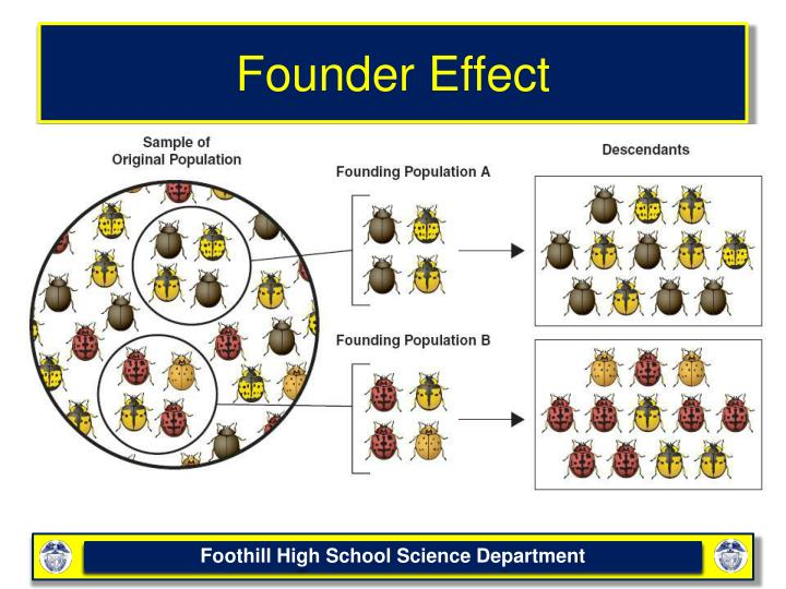 Founder Effect