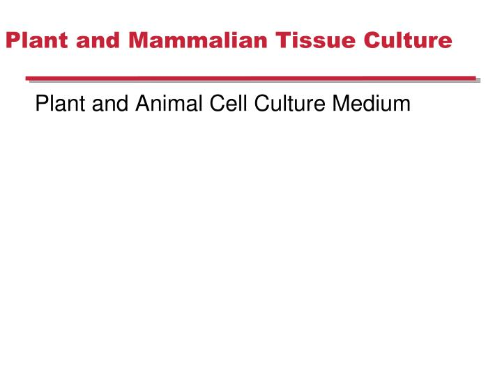 PPT - Plant and Mammalian Tissue Culture PowerPoint Presentation