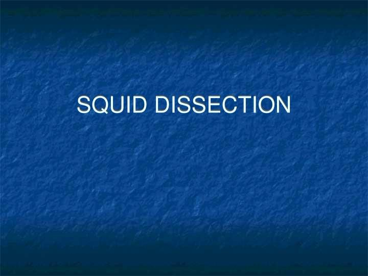 squid dissection n.