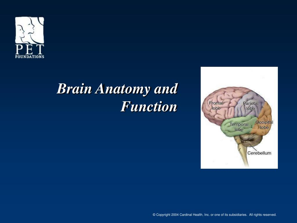 PPT - Brain Anatomy and Function PowerPoint Presentation - ID:6738940
