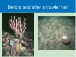 before and after a trawler net