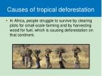 causes of tropical deforestation2